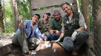 Lowland Tapir Health and Long-Term Conservation in Brazil