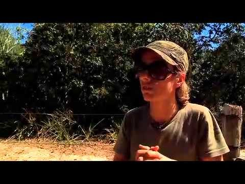 LOWLAND TAPIR IS HIGHLIGHT IN THE SPECIAL SERIES ABOUT THE BRAZILIAN PANTANAL ON REDETV 2012 – PART 2